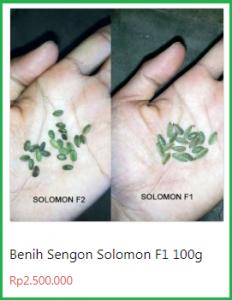 benih sengon solomon
