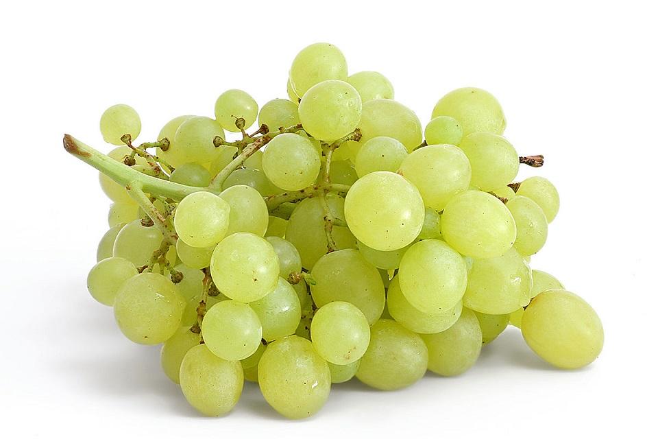 Prospek buah anggur hijau