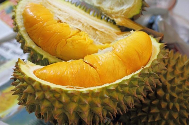 budidaya durian monthong