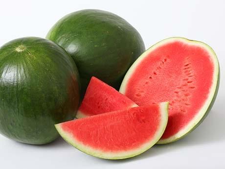 budidaya semangka tanpa biji