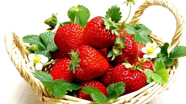 Budidaya Buah Strawberry