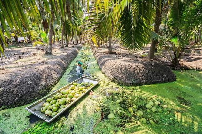 analisis usaha budidaya kelapa