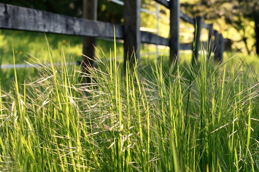 Jangan Anggap Sepele, Rumput Liar Ternyata Bisa Dimanfaatkan untuk Pembuatan Pupuk Kompos