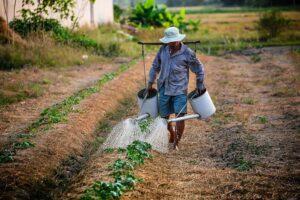 Pemanfaatan Limbah Ternak Sapi Menjadi Biourin