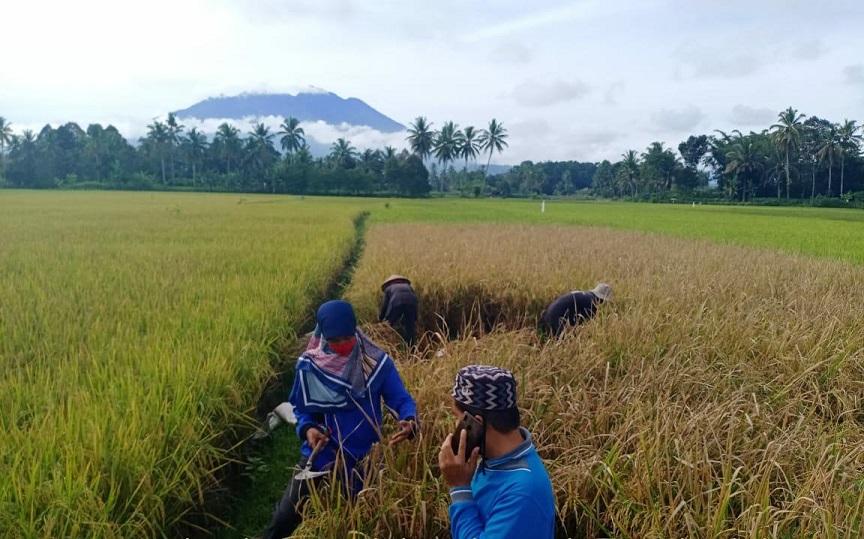 strategi untuk mempercepat regenerasi petani